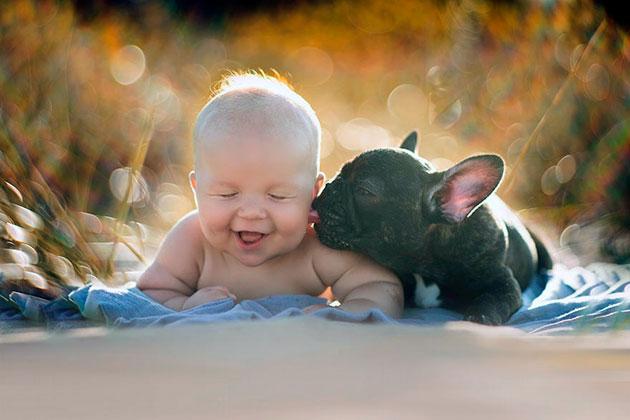 Когда у вас появиться ребенок, следует внимательно наблюдать за французским бульдогом и всячески пресекать посягательства на малыша