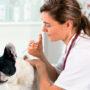 Прививки французскому бульдогу
